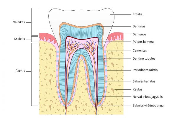 profilaktine-dantu-apziura-02
