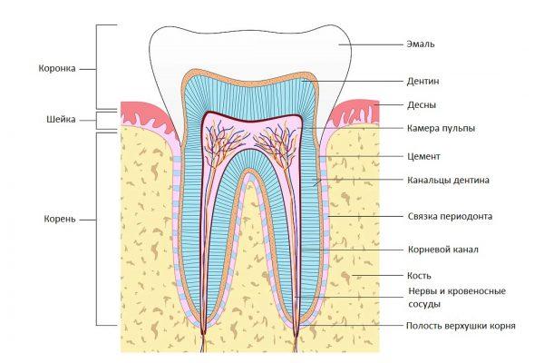 profilaktine-dantu-apziura-02 - ru